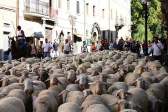 il VIAGGIO della TRANSUMANZA  –  da Cardito a Patarico  *  23 settembre 2012 *