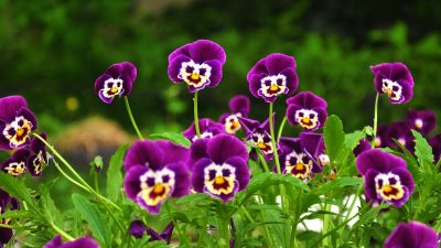 6971875-funny-flowers-pictures.jpg