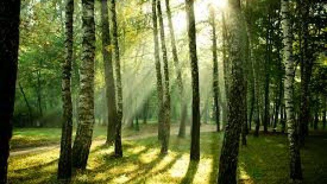 foreste2.jpg